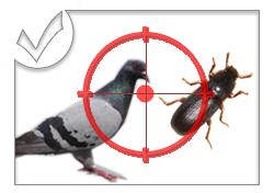 Lutte contre les Cafards - Rats - Pigeon